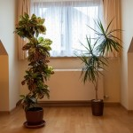 houseplants that help clean the air inside your home
