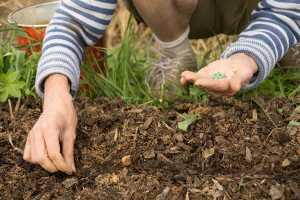 Preparing a Vegetable Garden